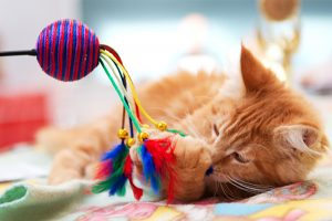 kitten-playing-with-toy
